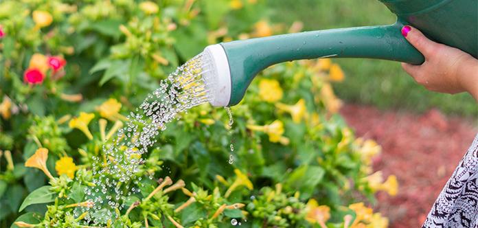 Wichtige Aufgabe bei der Gartenpflege im Sommer