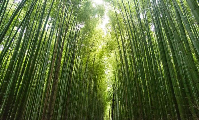 Bambus ist eine gute Plastik Alternative