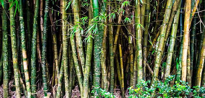 Bambus hat wenig Nachteile