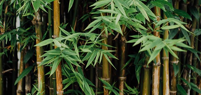 Bambus ist eine Alternative zu Plastik